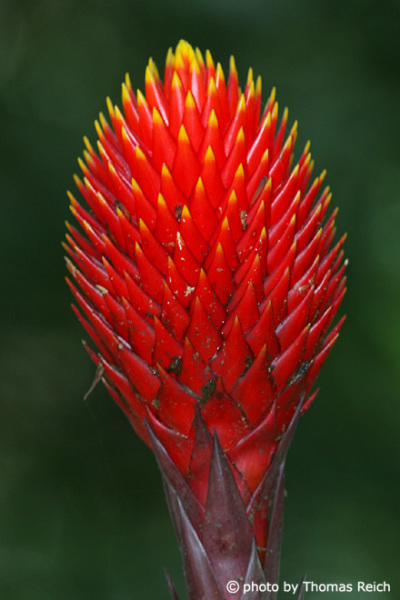 Red exotic blossom