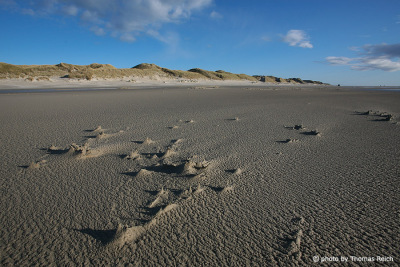 Sandy beach Amrum