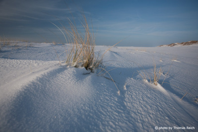 Beach grass with snow