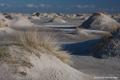 Dune landscape on Amrum