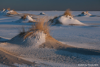 Dunes Amrum Winter