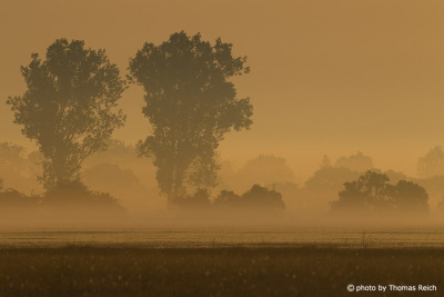 Morgennebel im Havelland Brandenburg