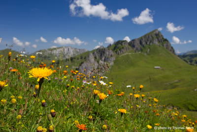 Summer flower meadow, Stierenberg, Zweisimmen