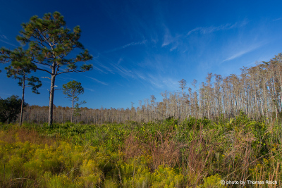 Three Lakes Prairie, Florida