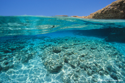Snorkelling Coral garden in Egypt