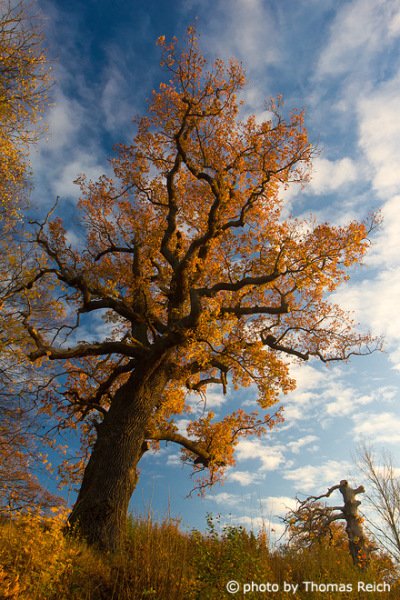 Tree with autumn colors
