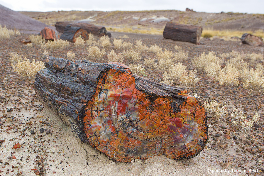 Verkieselter Baumstamm, Petrified Forest National Park, Arizona