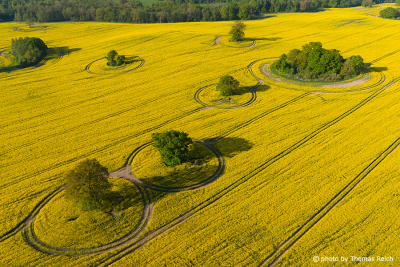Rapeseed field with trees from the air